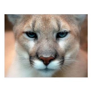 Puma Cartões Postais