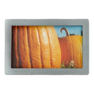 Pumpkins_Hancock_Shaker_village_2418