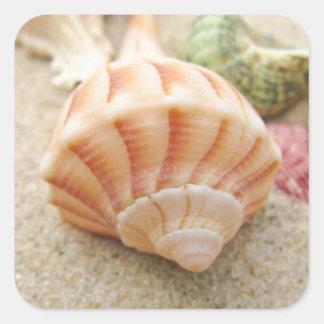 Pústula listrada do relâmpago de Shell do mar Adesivo Em Forma Quadrada