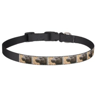pygmy-hippo-1 corrente para cachorro