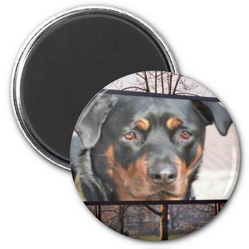 Quadro de avisos de Rottweiler Rottie no parque Ima