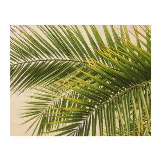 Quadro De Madeira A palmeira sae da foto tropical da natureza