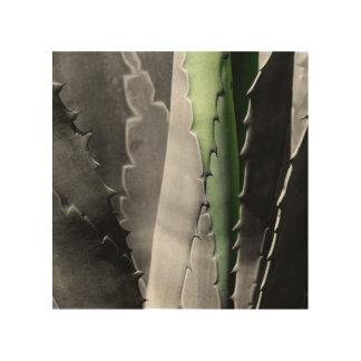 Quadro De Madeira Aloés - fotografia macro das belas artes em preto
