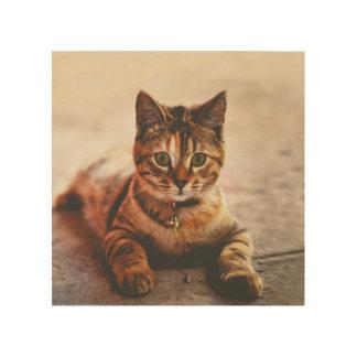 Quadro De Madeira Animal de estimação novo bonito do gatinho do