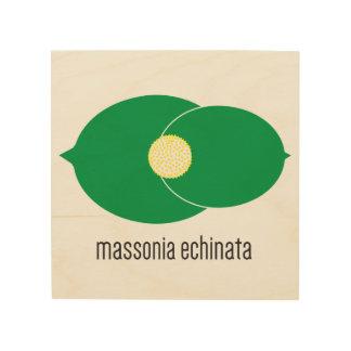 Quadro De Madeira Arte de madeira da parede de Massonia Echinata