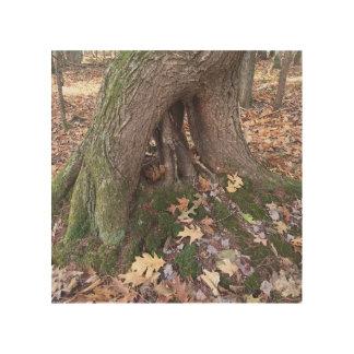Quadro De Madeira Árvore original nas madeiras da arte da parede da