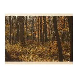 Quadro De Madeira Caminhada nas madeiras