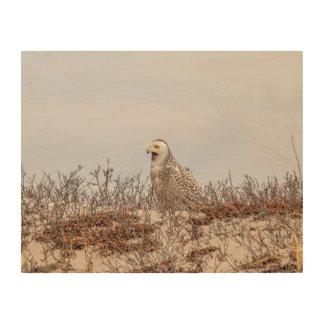 Quadro De Madeira coruja 14x11 nevado que senta-se na praia