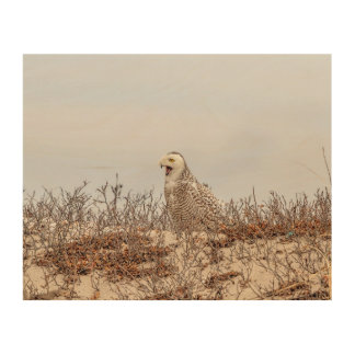 Quadro De Madeira coruja 1x8 nevado que senta-se na praia