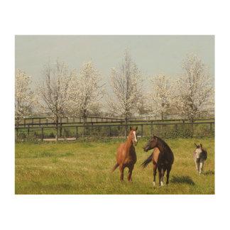 Quadro De Madeira Dois cavalos e um asno que pasta no primavera