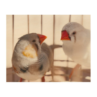 Quadro De Madeira Dois pássaros bonitos do passarinho na gaiola
