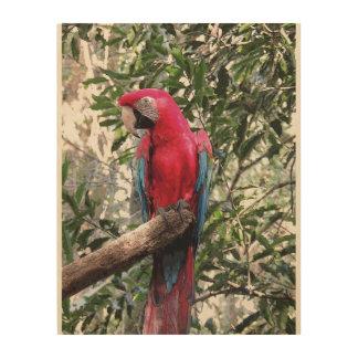 Quadro De Madeira Escarlate do pássaro do Macaw