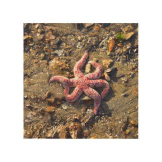 Quadro De Madeira Estrela do mar solitária