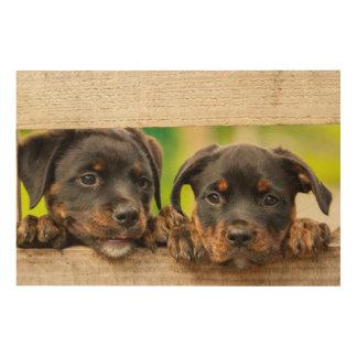 Quadro De Madeira Filhotes de cachorro bonitos do rottweiler que
