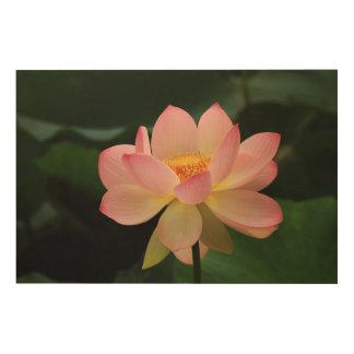 Quadro De Madeira Flor de Lotus tropical calma do rosa de jardim da