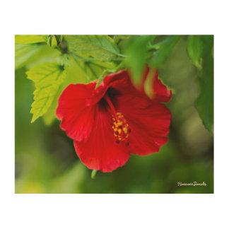 Quadro De Madeira Flor tropical de Havaí do hibiscus vermelho