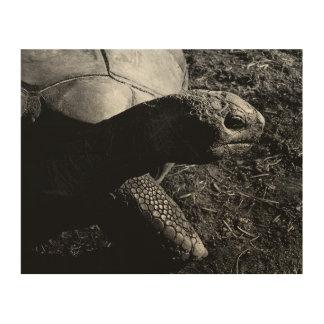 Quadro De Madeira Fotografia da tartaruga em preto e branco