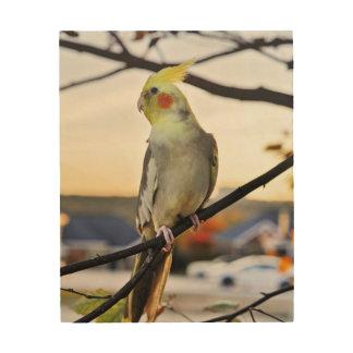 Quadro De Madeira Fotografia do perfil do Cockatiel