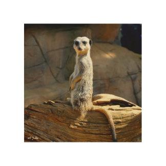 Quadro De Madeira Imagem da foto de Meerkat na madeira