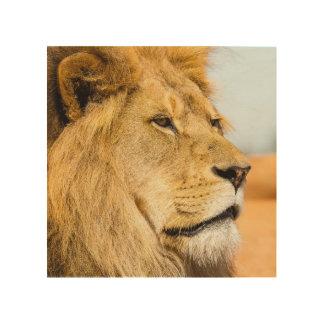 Quadro De Madeira Leão grande que olha longe