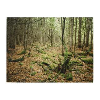 Quadro De Madeira Na floresta