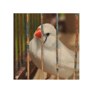 Quadro De Madeira Pássaro branco do passarinho de zebra na gaiola