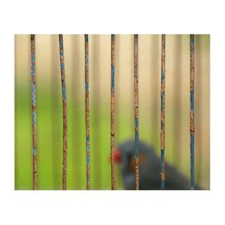 Quadro De Madeira Pássaro, gaiola, bares