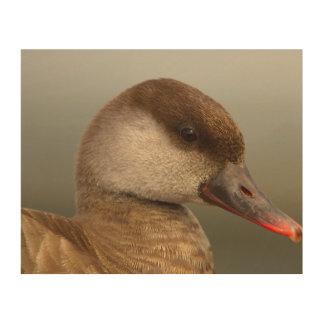Quadro De Madeira Pato fêmea do larro, rufina do netta