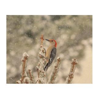 Quadro De Madeira pica-pau Vermelho-inchado 10x8 na neve