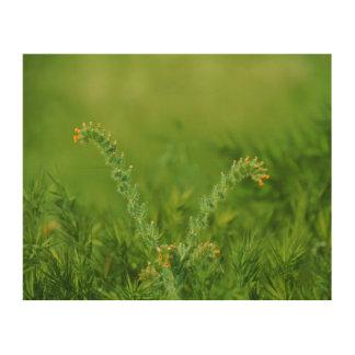 Quadro De Madeira Planta selvagem verde