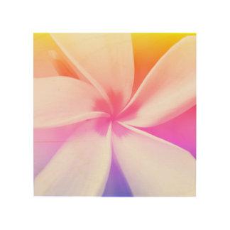 Quadro De Madeira Plumeria branco - retrato macro