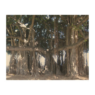 Quadro De Madeira Poster havaiano da madeira da árvore de Banyan