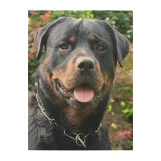 Quadro De Madeira Retrato de Rottweiler