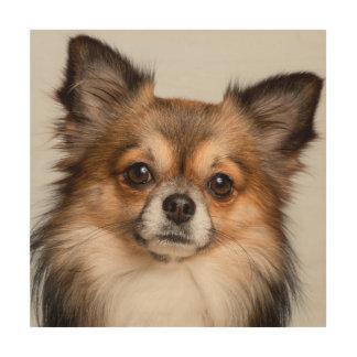 Quadro De Madeira Retrato impressionante da chihuahua