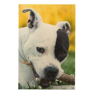 Quadro De Madeira Terrier de Staffordshire americano