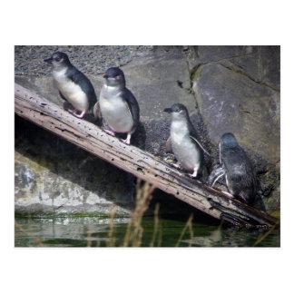 Quatro pinguins pequenos cartões postais
