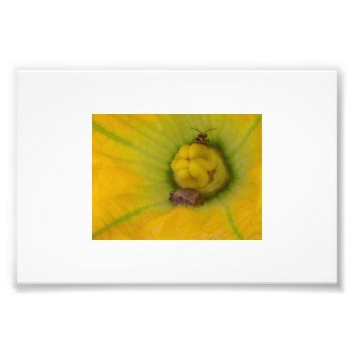 Que eu ver na flor da flor? pelo CR Sinclair Impressão De Foto