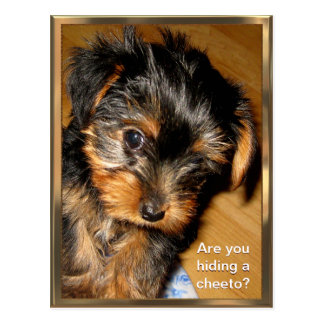 Que você que esconde? Cartão customizável Cartões Postais