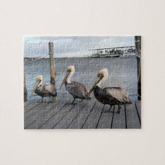 Quebra-cabeça 3 pelicanos em seguido