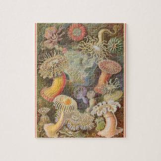 Quebra-cabeça Actiniae - Ernst Haeckel 8x10