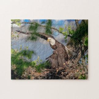 Quebra-cabeça Águia americana que sae do ninho