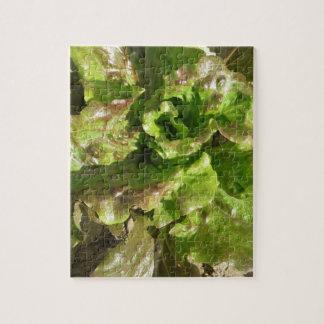 Quebra-cabeça Alface fresca que cresce no campo. Toscânia,