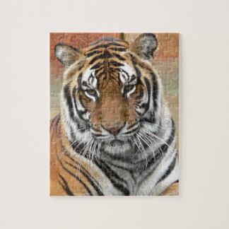Quebra-cabeça Alugueres Tigres no projecto