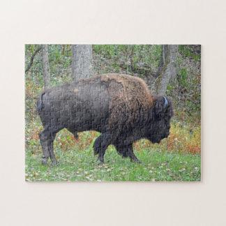 Quebra-cabeça Bisonte americano no outono adiantado