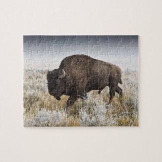Quebra-cabeça Bisonte americano ou búfalo