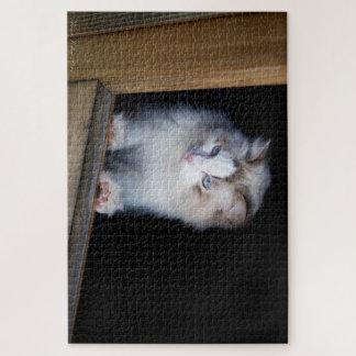 Quebra-cabeça branco do gato