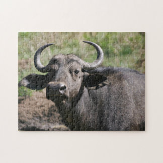 Quebra-cabeça Búfalo de água africano