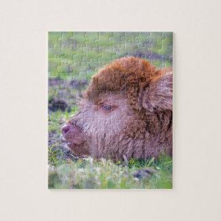 Quebra-cabeça Cabeça da vitela escocesa recém-nascida marrom do