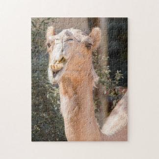 Quebra-cabeça Camelo que olha fixamente ao mastigar