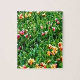 Quebra-cabeça Campo com as tulipas cor-de-rosa e amarelas